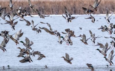 2020 Waterfowl Season Preview – NDGNF – 09-17-2020